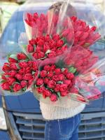 Бордовые тюльпаны